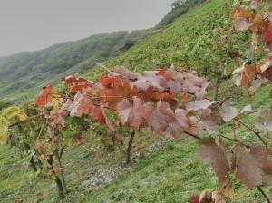 Herbstfarben - autumn colours