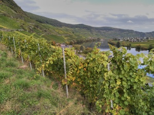 Weinberge an der Mosel - Vineyards of the Mosel valley
