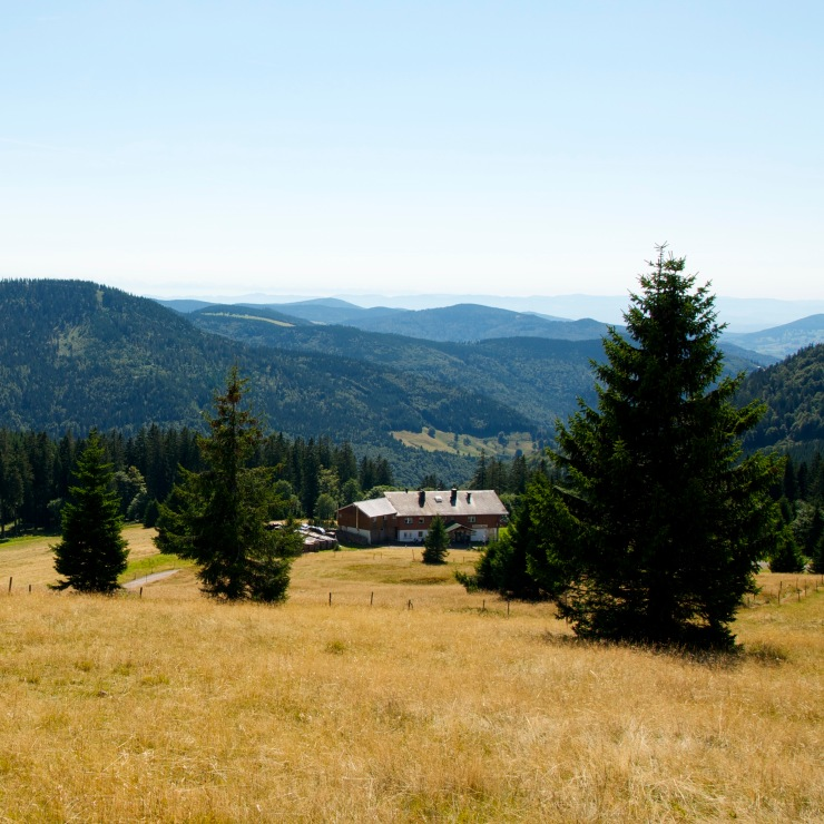View of the German Black Forest from a mountain