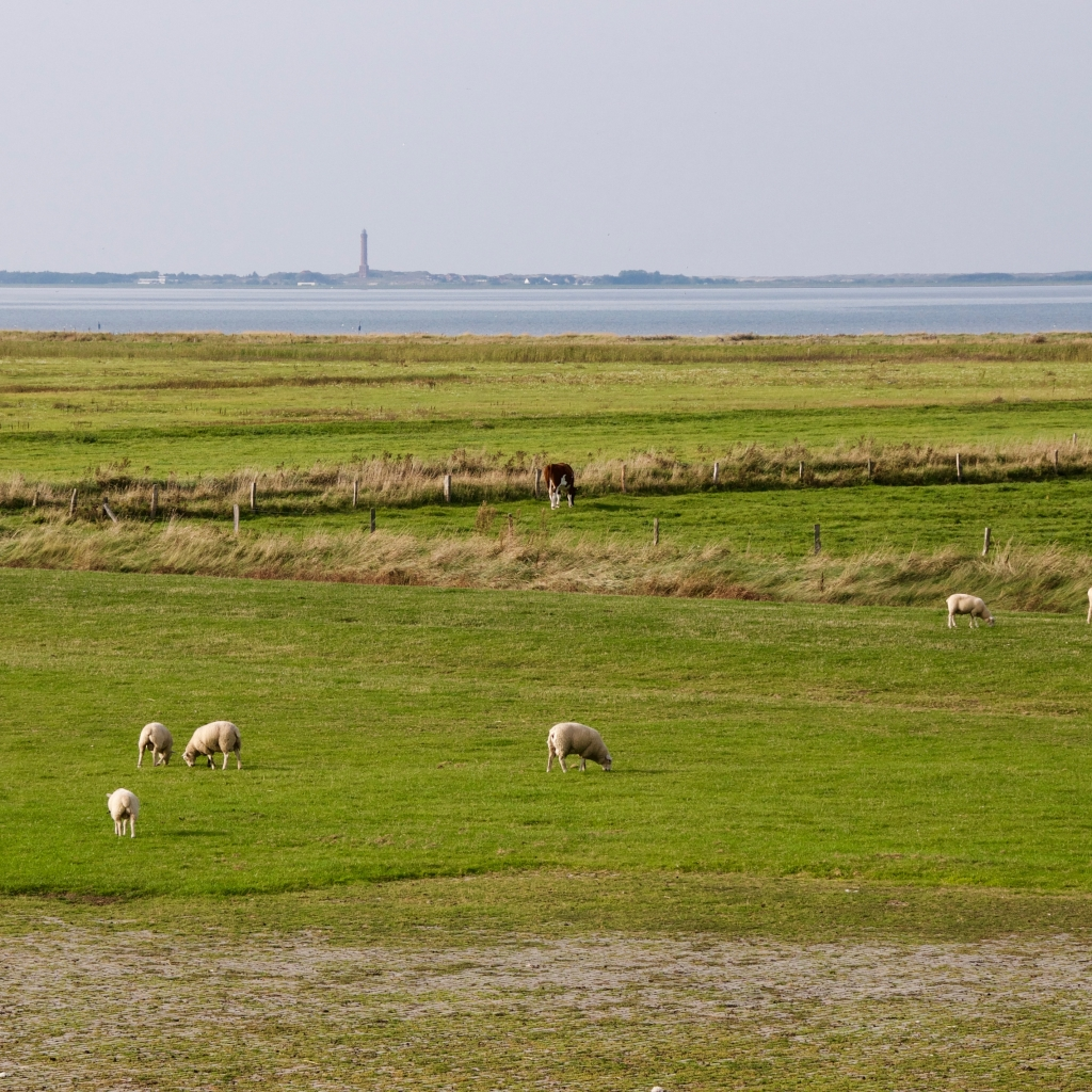 East Frisian landscape with an island in the background