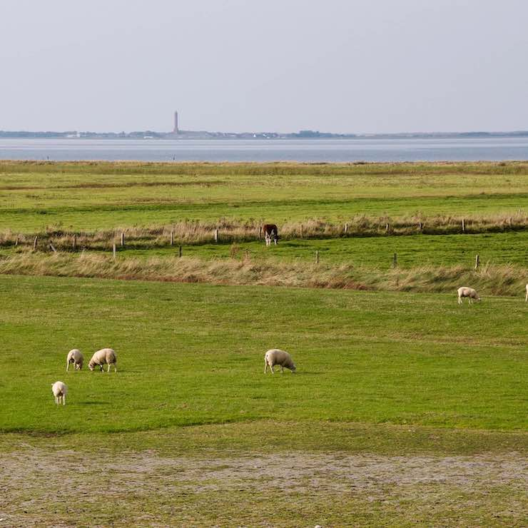 View of the marshes, sea and an island in Eastern Frisia (Ostfriesland)