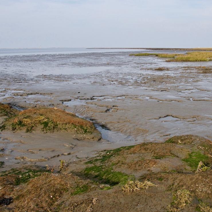 Wadden sea (Wattenmeer) at low tide