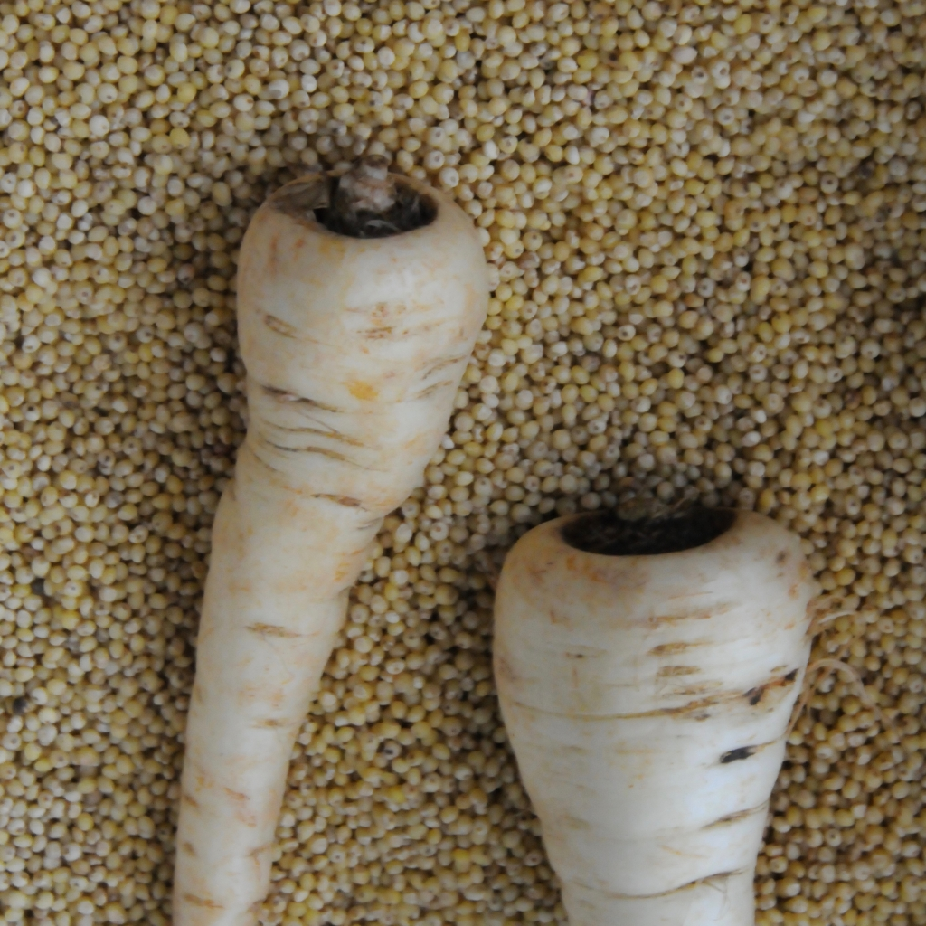 2 parsnips on grains of millet