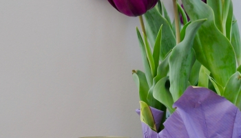 tulips and a mason jar of pickled pumpkin