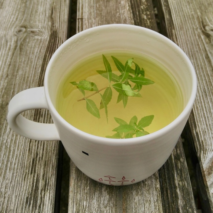 mug of lemon verbena tea